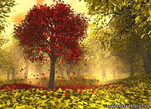 стихи для дошкольников про осень