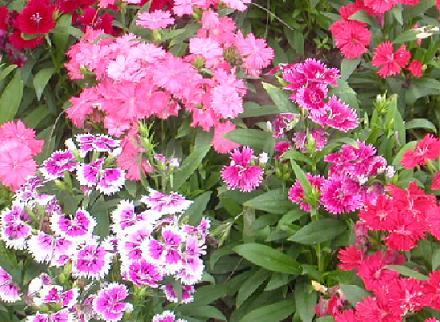 календарь садово-огородных работ на июль