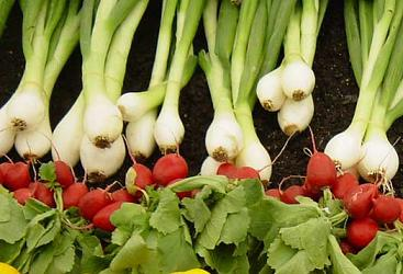 сеем овощи под зиму и зимой