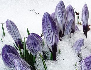 календарь огородника на февраль