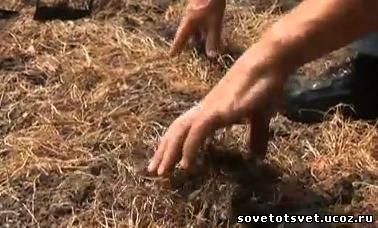 осенняя подготовка почвы к зиме