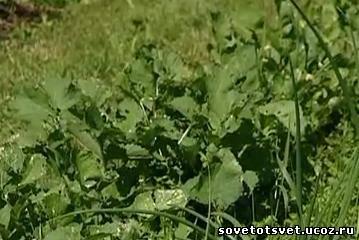 органическое земледелие, принципы