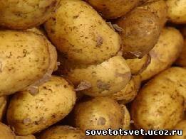 лечение картофельным крахмалом