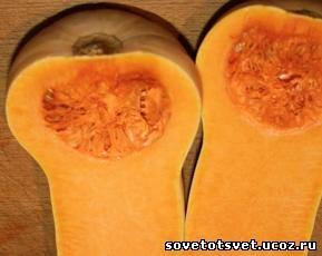 Народное лечение тыквой, семенами, мякотью, соком, цветами, плодоножками