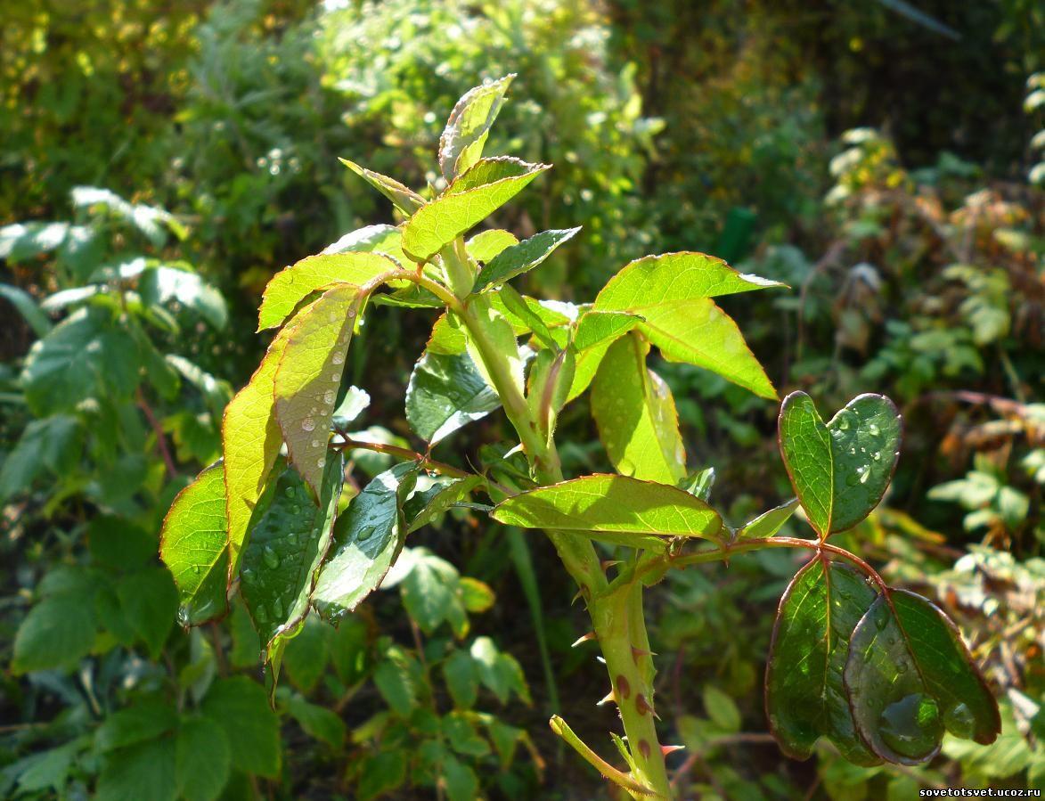 микроэлементы в жизни растений